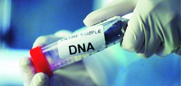 تحليل Dna ما هو و آلية عمله و كيف يمكن إجراءه و مدة ظهور نتيجة التحليل مجلة رجيم