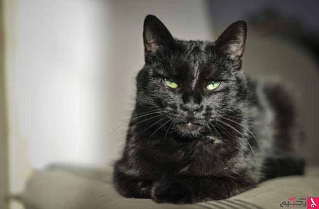 تفسير حلم القطط في المنام للنابلسي مجلة رجيم