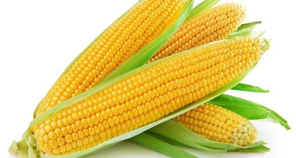 أنواع الذرة الفرق بين الذرة البيضاء والذرة الصفراء فوائد الذرة مجلة رجيم