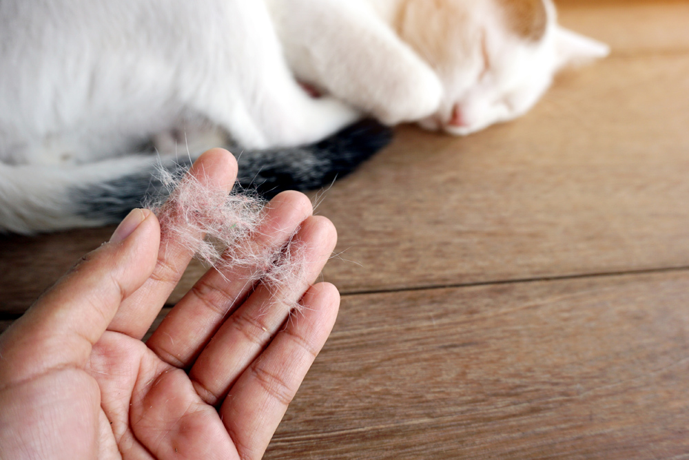 الامراض الجلدية لدى القطط مجلة رجيم