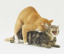 Photo of التزاوج في القطط