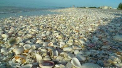 Photo of اجمل شواطىء العالم شاطئ الصدف في أسبانيا صور ومعلومات
