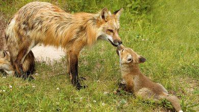 التوالد عند الحيوانات