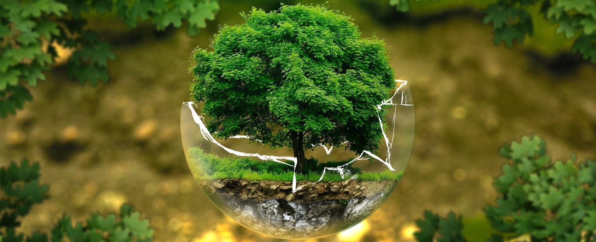 موضوع حول البيئة المنظومة البيئية وأهم عناصرها وكيفية حمايتها من التلوث