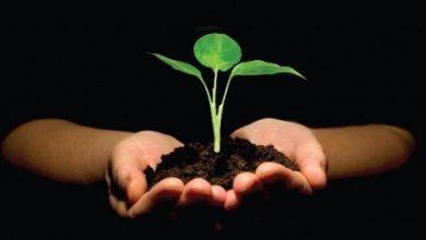 ما هي عناصر التوازنات الطبيعية وأثرها