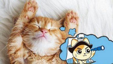حلم القطط