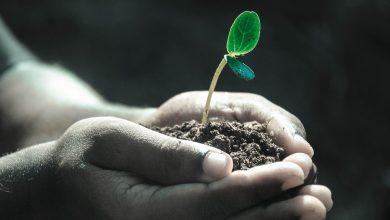 مراحل تطور النباتات