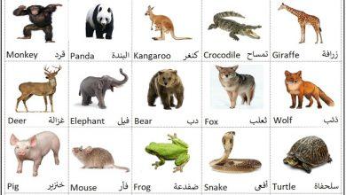 صورة حيوانات الغابة والحديقة Forest animals