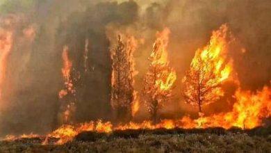 صور حرائق لبنان