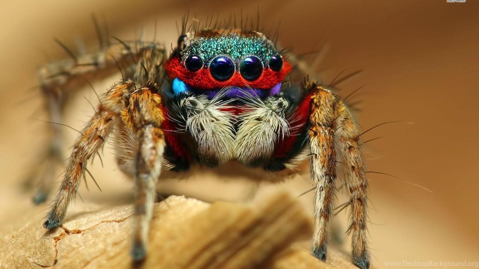 interpretation of the dream of spider