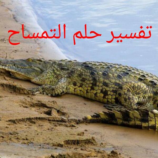 تفسير حلم التمساح مجلة رجيم