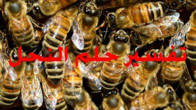 تفسير حلم النحل
