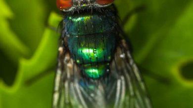 تفسير حلم الحشرات الطائره في المنام