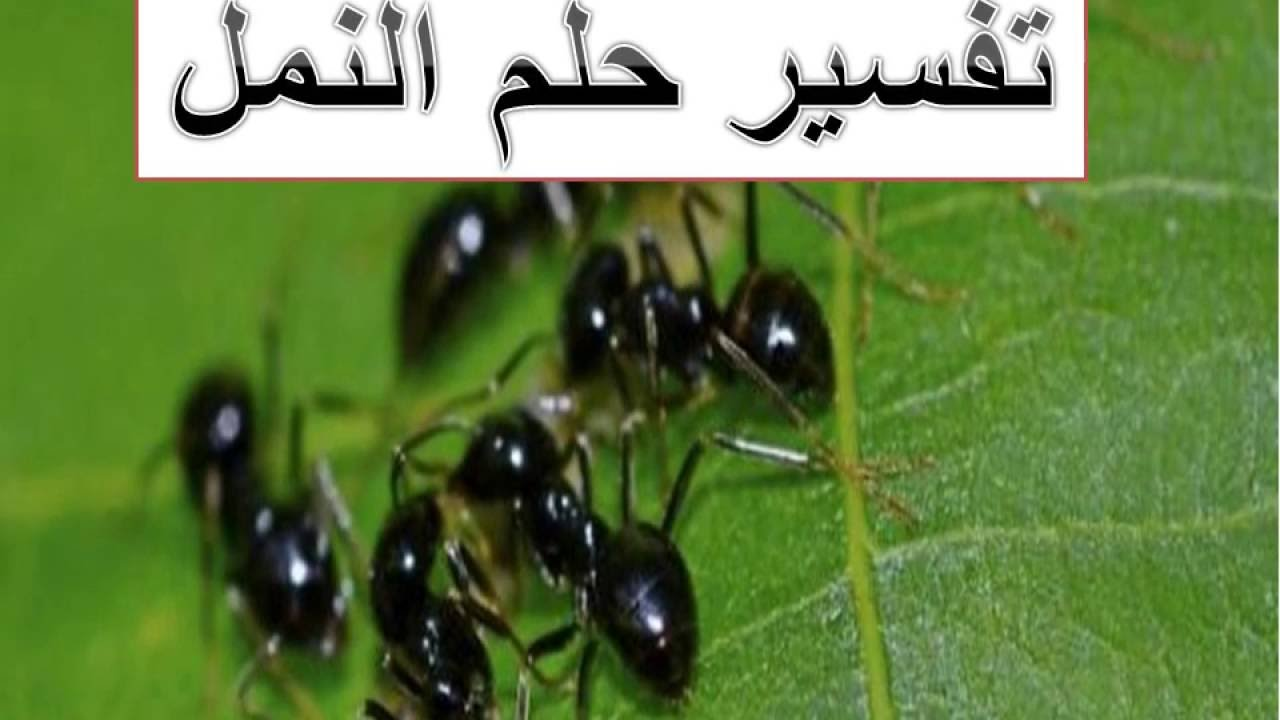 تفسير حلم النمل مجلة رجيم