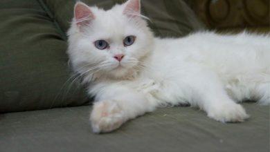 3 آلاف ريال تعويضاً عن قطة