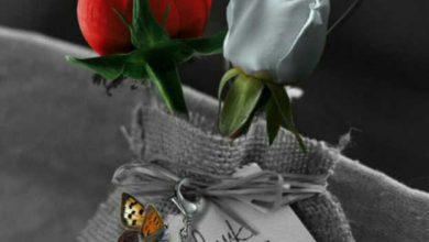 صور ورد رومانسيه , اجمل وارق الهدايا الرومانسيه