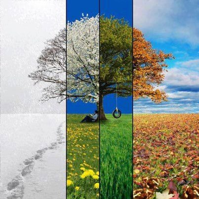 Photo of تأثير الفصول الأربعة على مزاج الإنسان