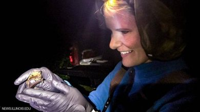Photo of عالمة أميركية عن أزمة كورونا: الخفافيش بريئة ونحن المذنبون