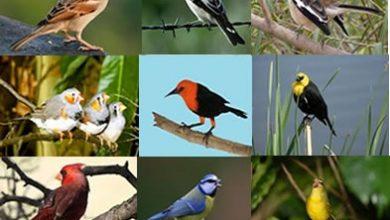 Photo of مواصفات الطيور , أشهر أنواع الطيور