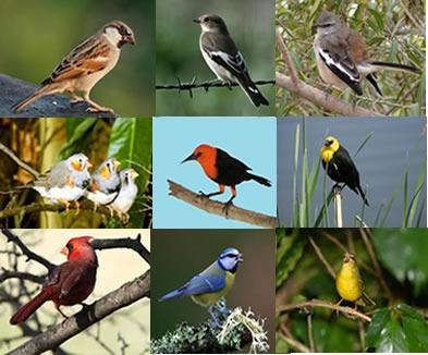 أنواع الطيور