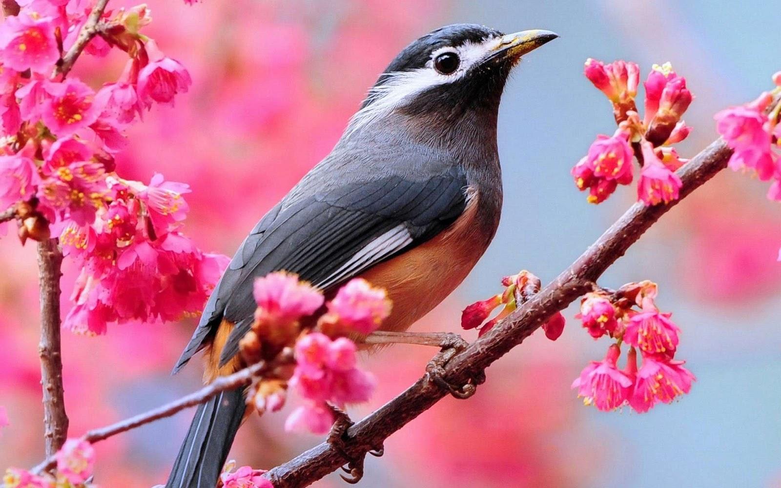 صور طيور وعصافير