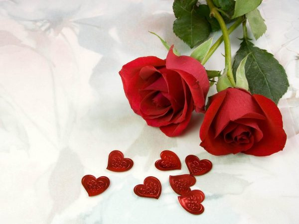 ورود رومانسية حمراء مع قلوب