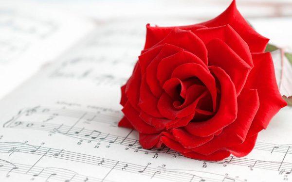 ورود رومانسية حمراء للاهداء