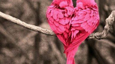 Photo of صور طيور ملونة , خلفيات عصافير HD للجوال