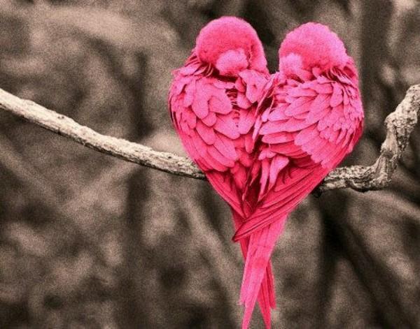 صور طيور ملونة , خلفيات عصافير HD للجوال