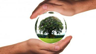 عبارات وحكم عن يوم الشجرة