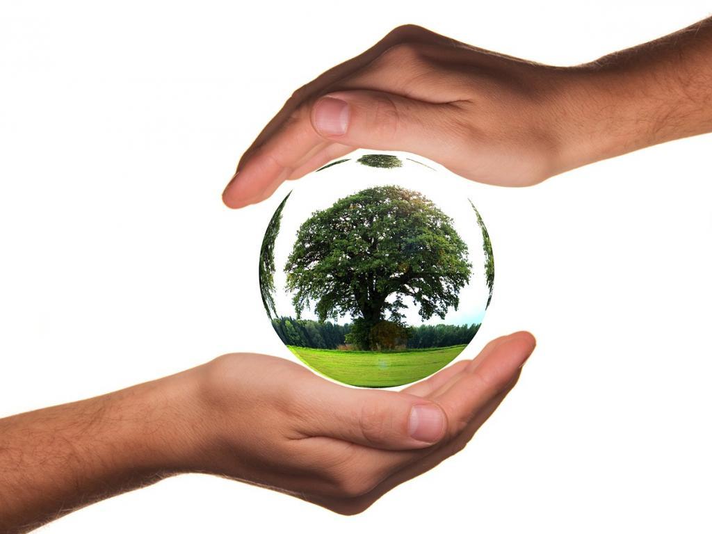عبارات وحكم عن يوم الشجرة مجلة رجيم