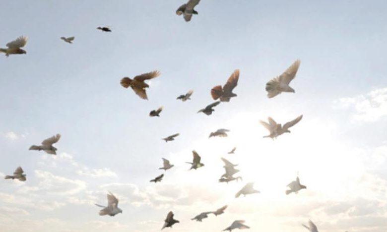 تفسير رؤية الطيور