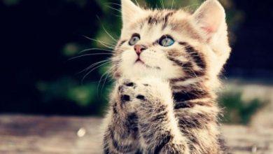 اهم معلومات عن تربية القطط