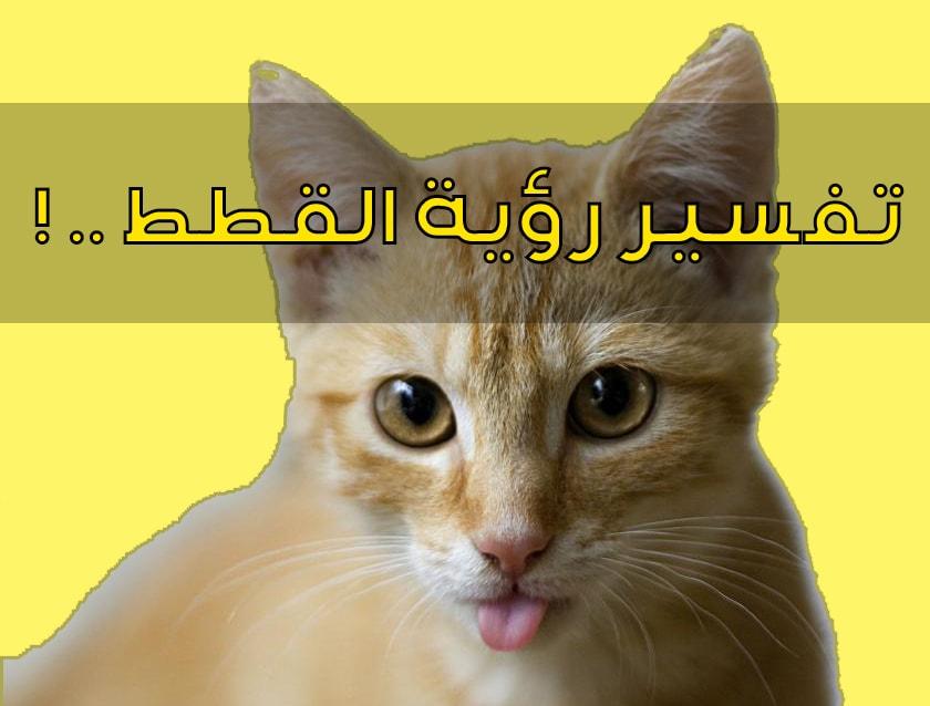 تفسير حلم رؤية القطة في المنام ومعنى القطة السوداء والبيضاء في الحلم مجلة رجيم