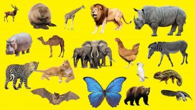 حلم الحيوانات